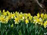 서산 봄나들이 가볼만한곳 수선화 만발한 유기방가옥