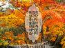 독립기념관 단풍나무 숲길