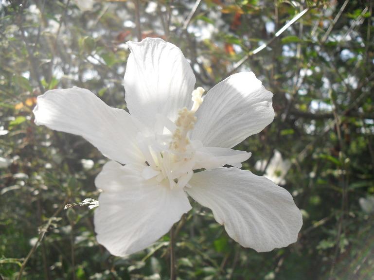 자랑스러운 우리나라에 살고 있어서 영광입니다....무궁화꽃 23종류.인생이란 꿈이라로/오승근