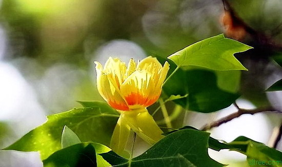 앞으로 꽃이 피는 낙엽활엽수를 선호하게 될 것입니다.