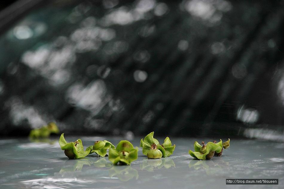 비가 내리면 음악 이 흐르고