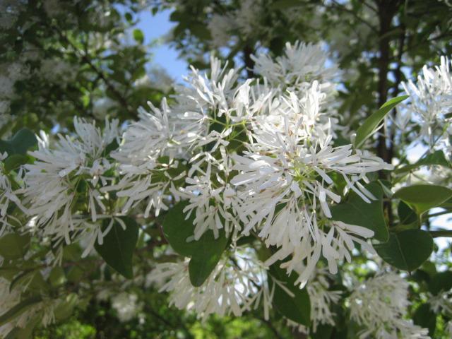 봄꽃 모음
